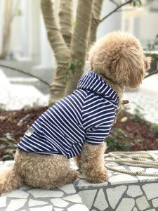 モデル犬:トイ・プードル / ♀ / 4kg 着用:MAX BONE【Harbor Small Stripe Hoodi】Mサイズ